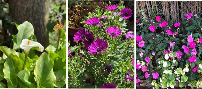 Set Flores_01